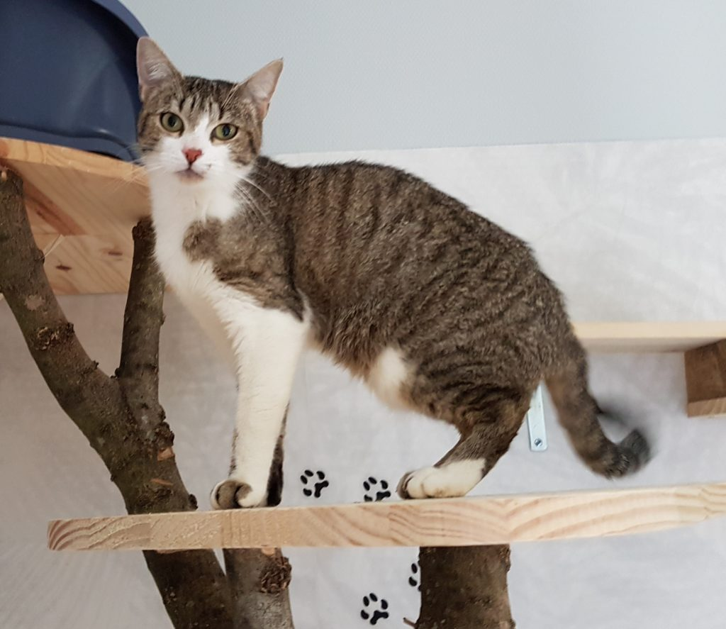 un chat qui grimpe à un arbre dans la chatterie