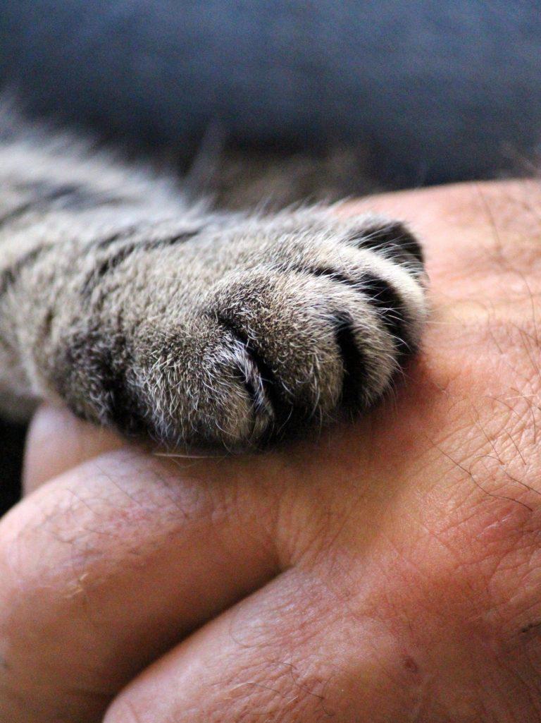 une patte de chat sur une main