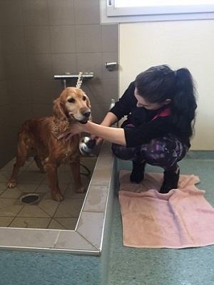 toiletteuse qui rince un chien