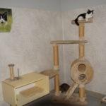deux chats sur un grand arbre à chat