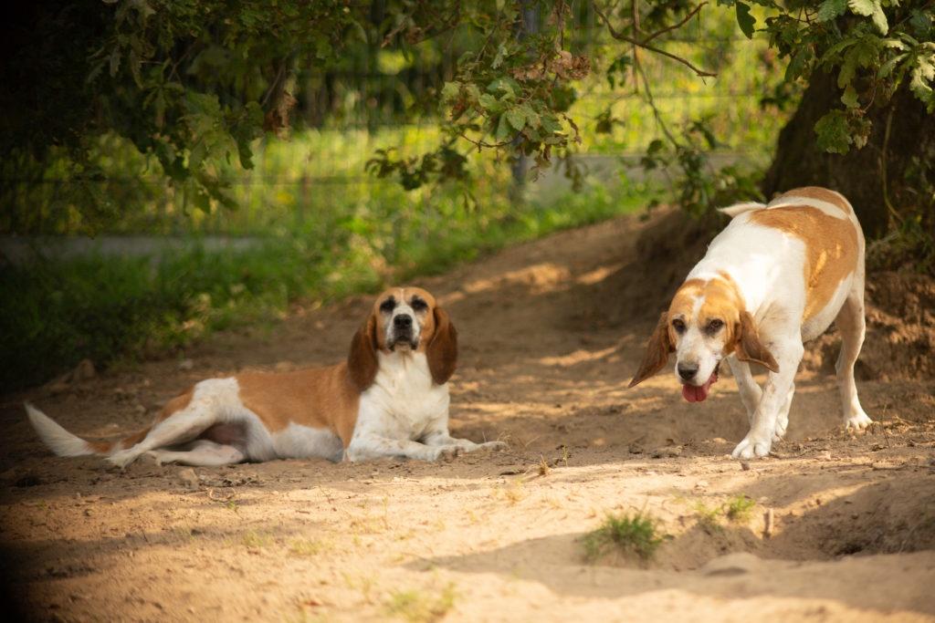 deux chiens qui profitent du soleil dans un parc