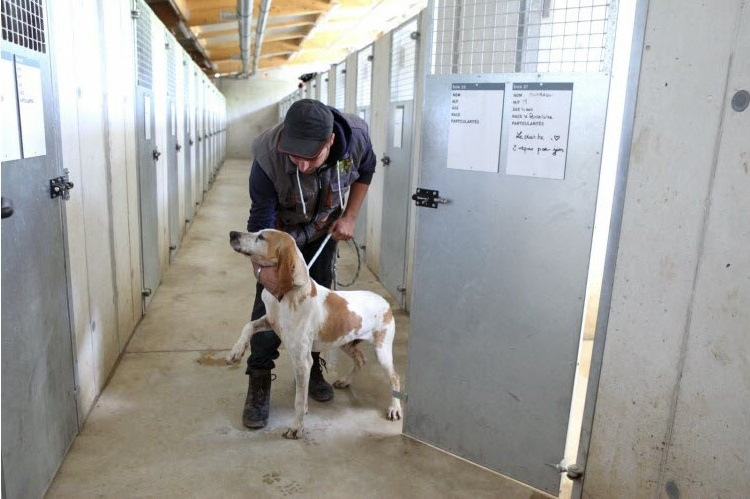 animalier sortant un chien de son boxe