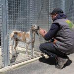 un animaliers qui caresse un chien à travers la grille d'un boxe