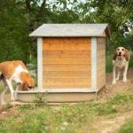 deux chiens dans un parc extérieur
