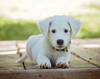 Les indispensables quand on adopte un chien