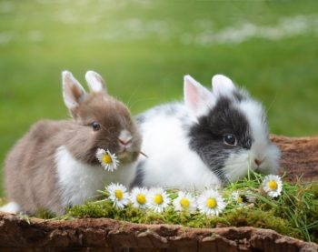 Les indispensables quand on adopte un lapin